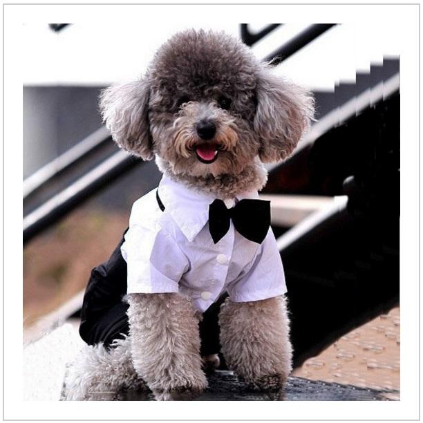 Společenský obleček pro psy