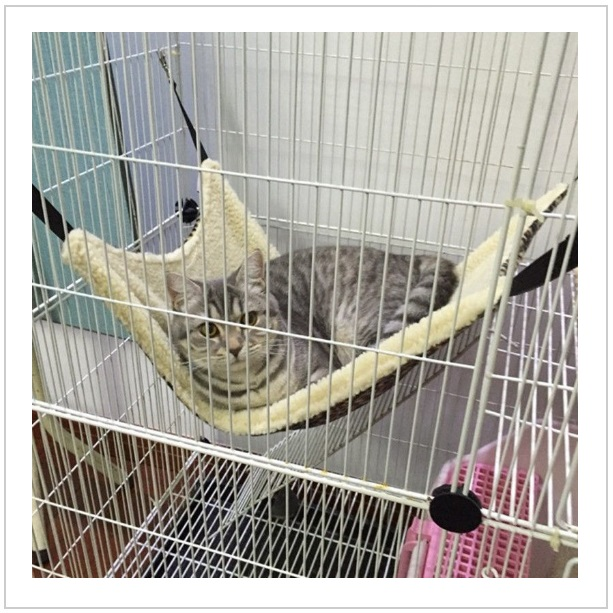 Závěsný pelíšek pro kočky
